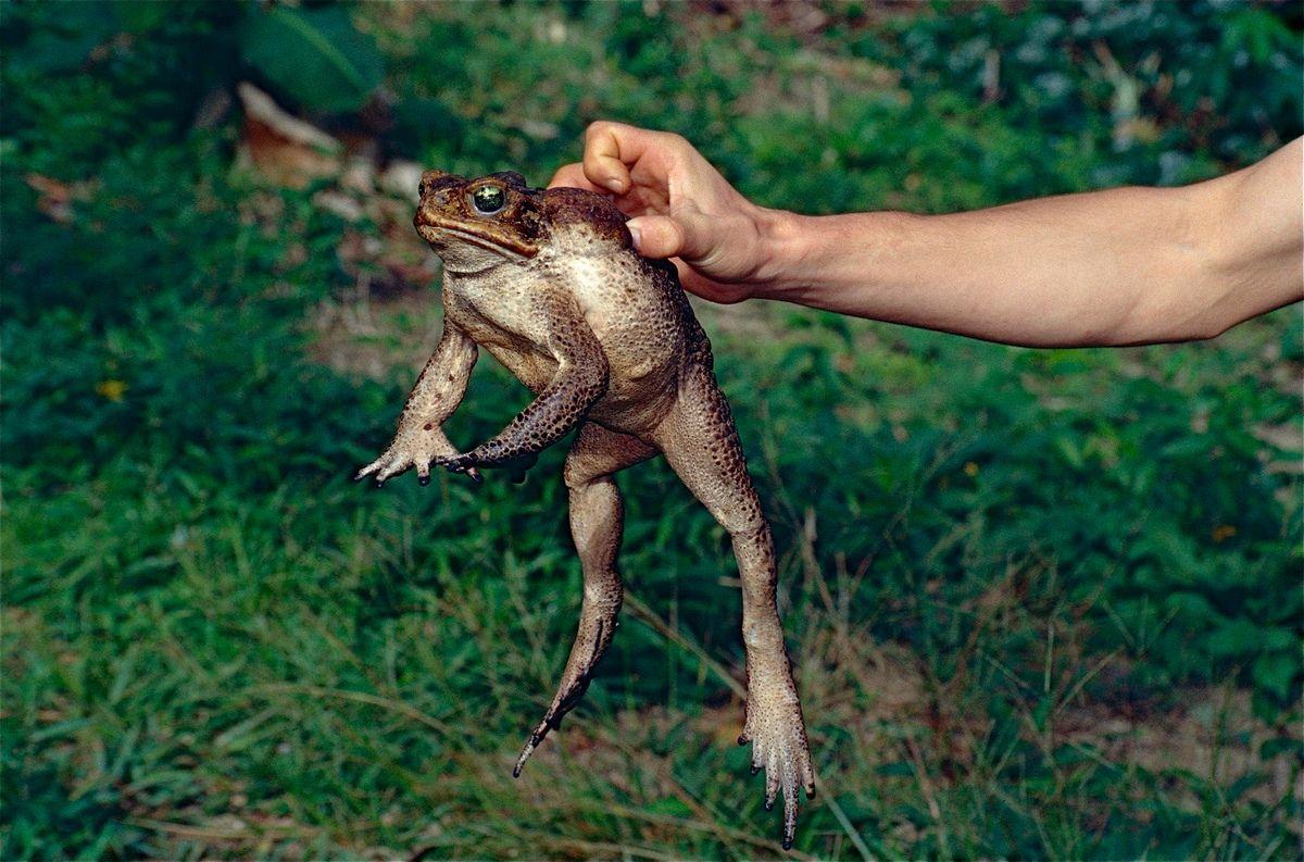 миграция лягушек