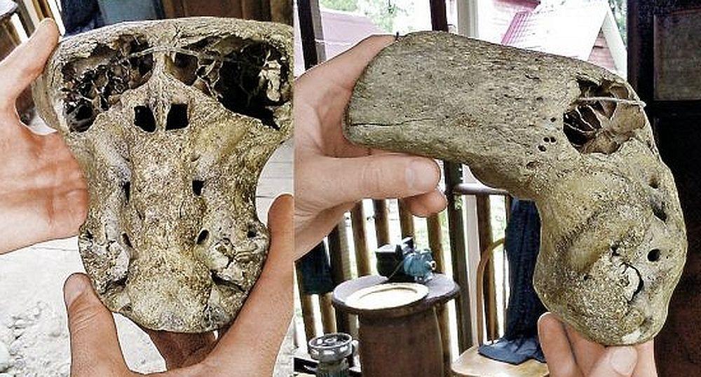 череп неизвестного вида человека